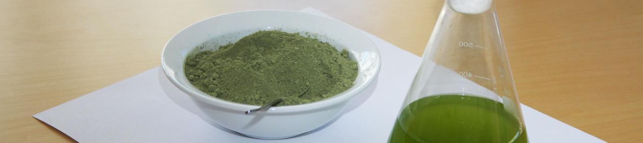 mikroalger i pulver og i løsning på EM-kolbe