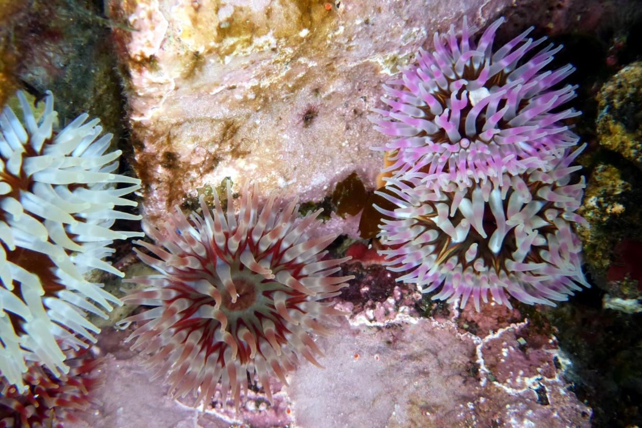 May Calendar Header : Benthos ecology research unit