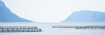 marine aquaculture and the environment